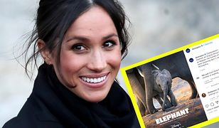 Problem ochrony afrykańskich słoni jest bliski sercu Meghan i jej męża