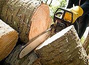 Ceny drewna szaleją