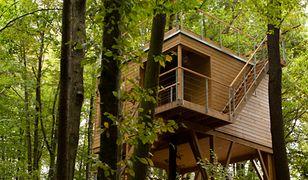 Dom na drzewie. Ekologiczny pomysł na mieszkanie