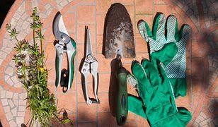 Czas przygotować ogród i sad na nowy sezon