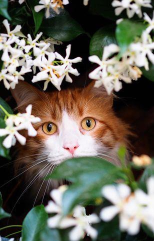5 kocich chorób, które mogą zagrozić Twojemu pupilowi