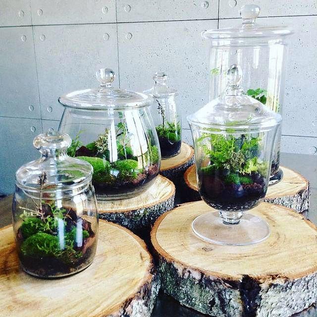 Las w butelce: (nie)nowa koncepcja
