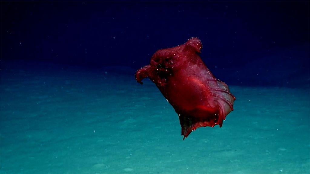 """Strzykwa. Stworzenie nazywane """"ogórkiem morskim"""" lub """"bezgłowym kurczakiem"""""""