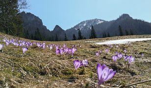 Koronawirus w Polsce. Zamknięte górskie szlaki sprzyjają przyrodzie