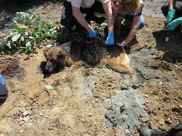 Strażacy z Kalisza ratowali psa, który ugrzązł w... roztopionym asfalcie