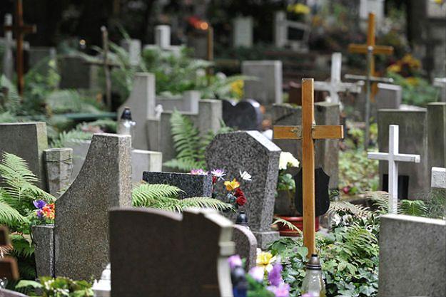 Jak dojechać na wrocławskie cmentarze? Sprawdź dojazd