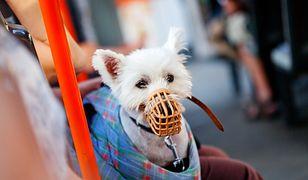 Kierowca miał prawo nie zgodzić się na obecność psa w autobusie