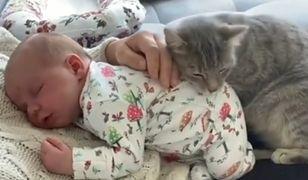 Kot położył się na niemowlaku. Wzruszające nagranie podbija sieć