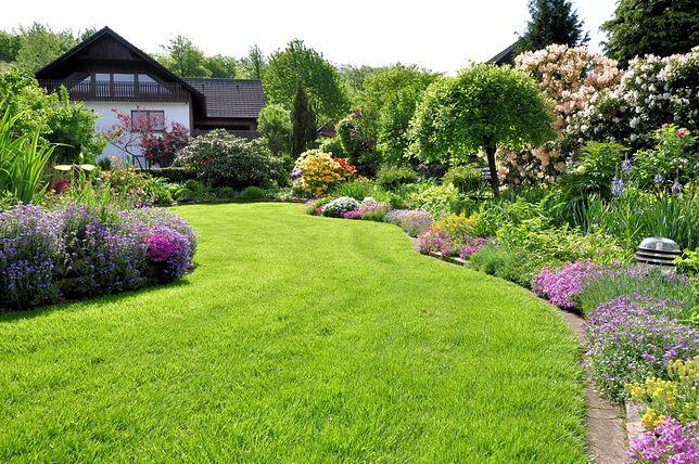 Piękny trawnik będzie prawdziwą ozdobą ogrodu