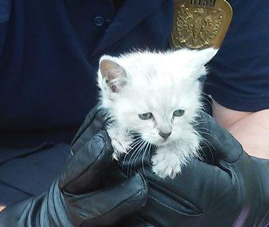 """Walka o życie małego kota. """"Obserwowaliśmy jak zwierzę traci siły"""""""