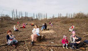 Matki Polki na wyrębie. Karmią dzieci piersią wśród ściętych drzew