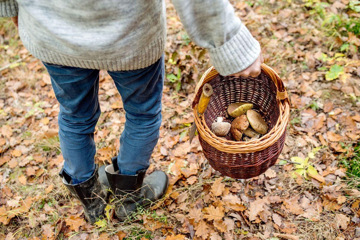 Obywatele Rumunii są podejrzewani o zbiór grzybów na handel (zdjęcie ilustracyjne)