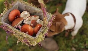 Wszystko o grzybach. Fakty i mity