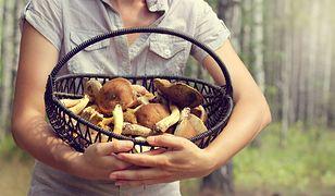 Jadalne i trujące grzyby, które łatwo ze sobą pomylić