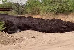 """USA. """"Czarna rzeka"""". Śmiertelnie niebezpieczna maź spłynęła kanałem Cañada del Oro"""