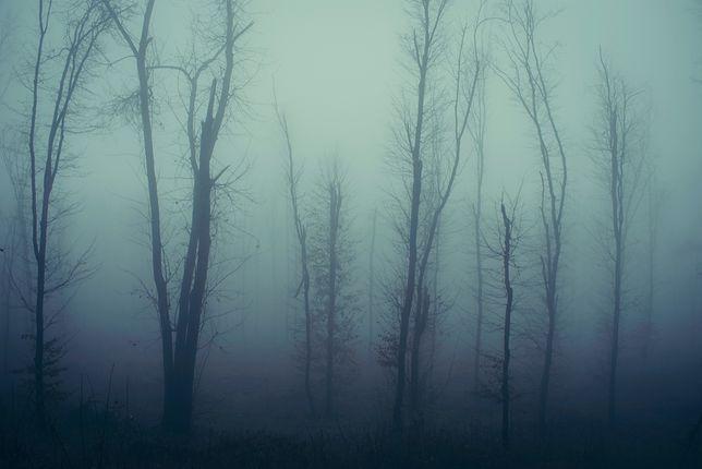 Nawiedzone lasy. Czas na jesienny spacer z dreszczykiem