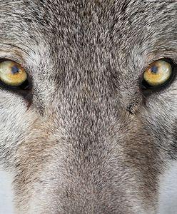 Najwspanialsze sanktuaria dla zwierząt na świecie. Gdy jedni chronią, Szyszko urządza obławę