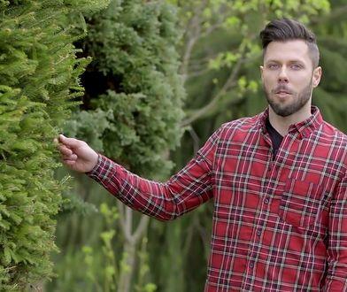 Formowanie krzewów to prosta sztuka