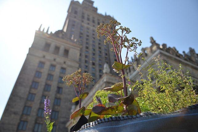 Na dachu PKiN-u urzędują miejskie pszczoły!