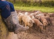 W 2013 r. rolnicy będą płacić składki zdrowotne tak, jak w 2012 r.