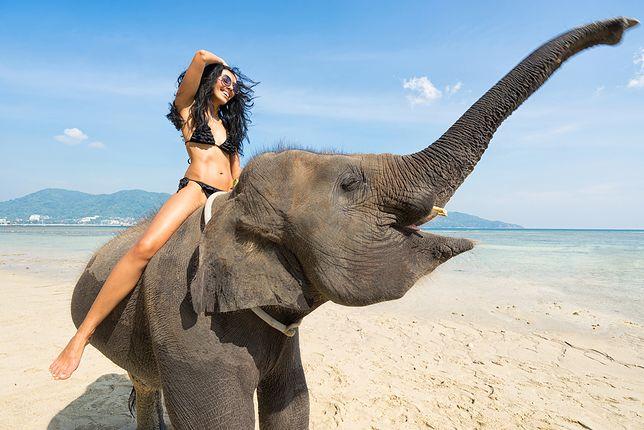 Przejażdżka na słoniu? Najpierw się dowiedz, w jakich warunkach żyją te zwierzęta