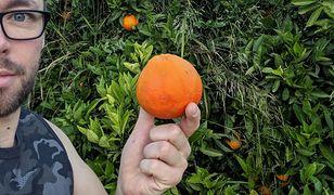 """""""Całe zbocze pokryte było głęboką zielenią z tysiącami jaskrawo pomarańczowych kulek. Nie mogłem się powstrzymać by nie spróbować choć jednej, więc nieśmiało zerwałem i pędem pożarłem"""""""