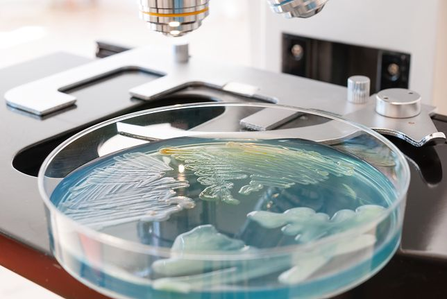 Superbakteria to globalny problem