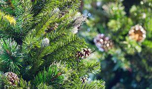 W drzewku świątecznym może czaić się zagrożenie.