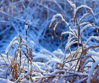 Pogoda. Pierwszy śnieg w Polsce spadł. Karkonosze przed Tatrami