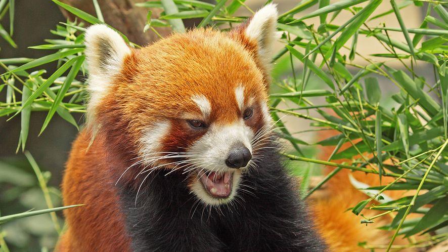 Chrome i Firefox bez obsługi FTP? Ten pomysł nie ma większego sensu