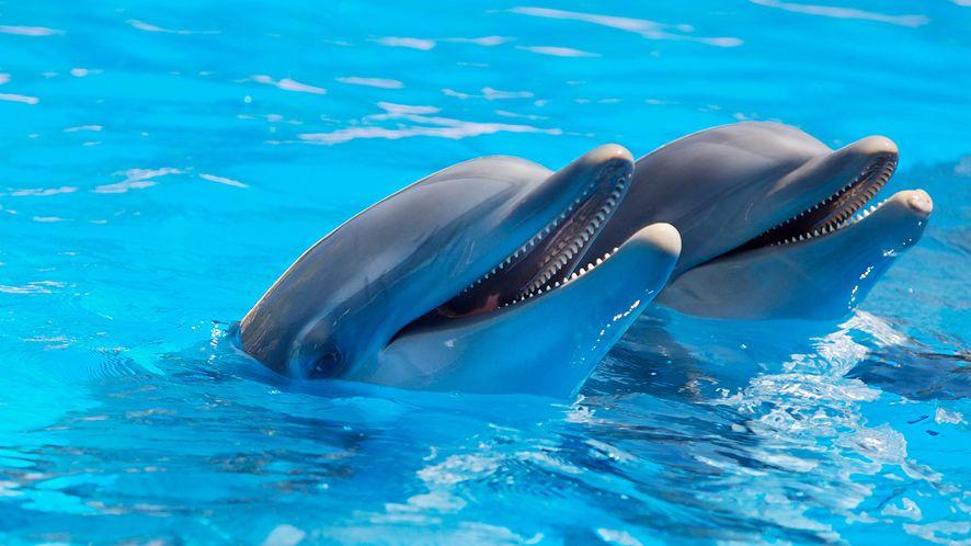 Każdy może być delfinem. Prosty headset pozwala poczuć, jak działa echolokacja