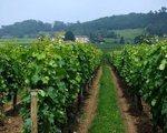 Wojna o winnice w Toskanii. Niszczą krajobraz?