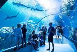 Oceanarium w Polsce. Sprawdź, gdzie można zobaczyć rekiny