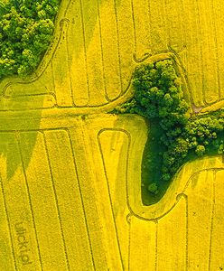 Niezwykłe zdjęcie z drona. Polski fotograf zaskoczył