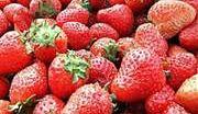 Rekordowe ceny truskawek