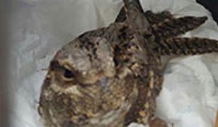 Warszawa. W przedszkolu znaleziono nietypowego ptaka