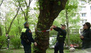 Koniec z nieograniczoną wycinką drzew. Mieszane uczucia Polaków