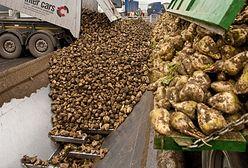 Protest plantatorów i pracowników cukrowni w Malborku