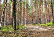 Zbieranie grzybów czy spacer z psem. Za co jeszcze mandat w lesie?