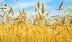 Coraz więcej gospodarstw ekologicznych w Polsce i w UE