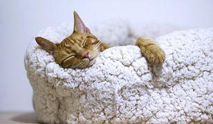 Koty mogą spać nawet ok. 16 godzin na dobę, dlatego potrzebują wygodnego miejsca do odpoczynku