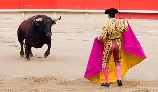 Organizatorzy imprez, które pokazują korridę, nie uginają się przed krytyką: w samej Hiszpanii odbywa się rocznie 1800 pokazów