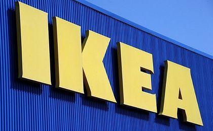 IKEA wycinała 600-letnie drzewa w Rosji
