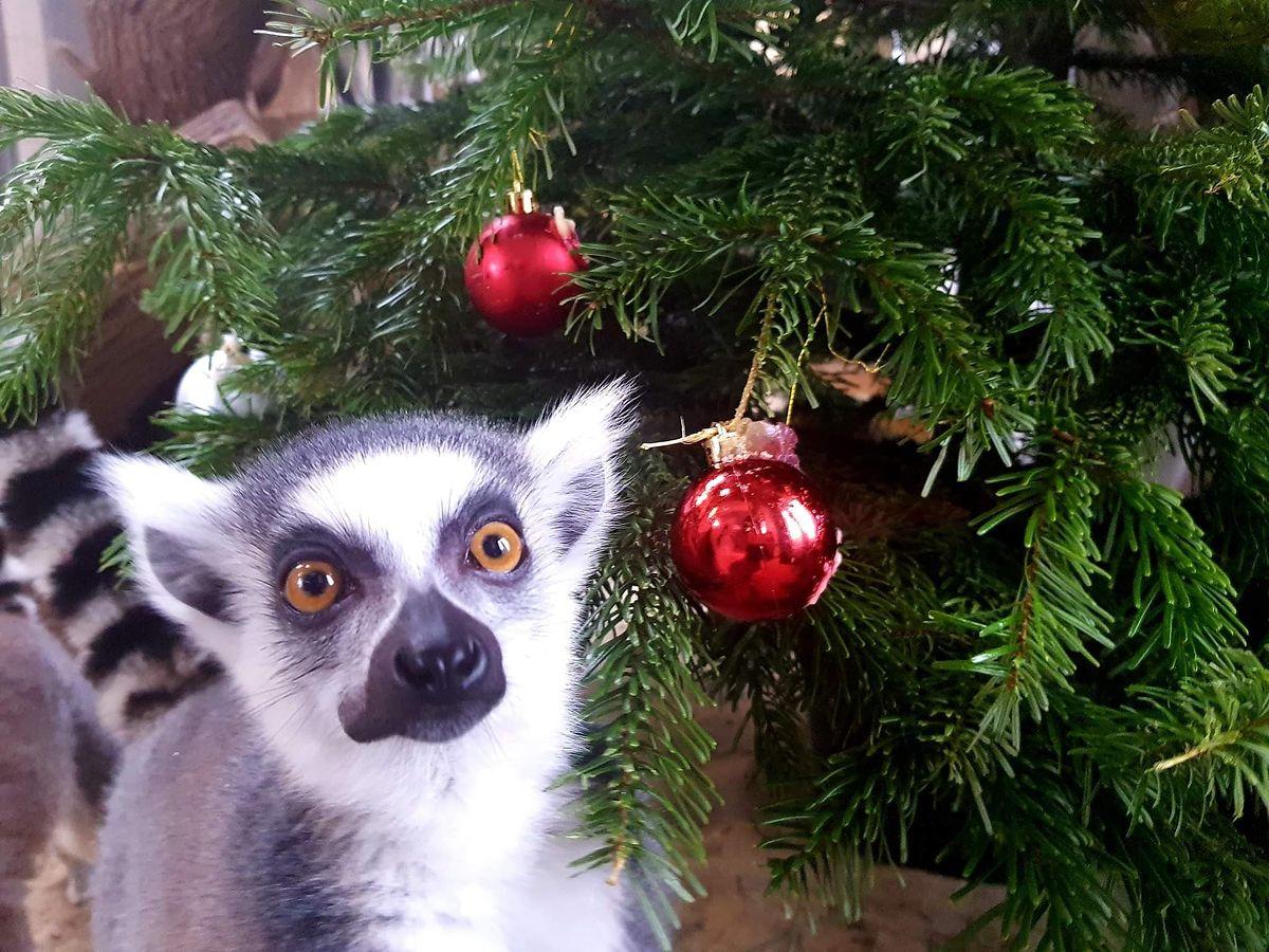 Warszawskie Zoo organizuje świąteczną zbiórkę