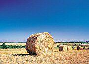 """Konflikt o ziemię. Resort rolnictwa zajmie się problemem """"słupów"""""""