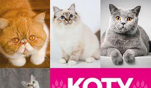 Expert. Koty - wybrane rasy. Encyklopedia