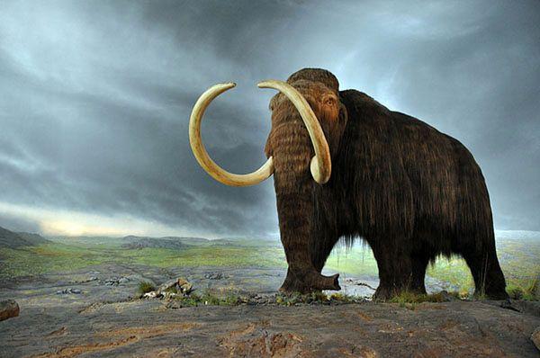 Władimir Putin interesował się klonowaniem mamuta