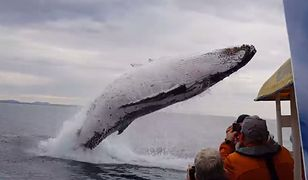 Wieloryba udało się sfilmować pasażerom jednego z morskich rejsów w okolicach Australii