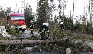 Strażacy usuwają powalone drzewa w Brzezinach.