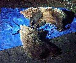 Przykry widok w Tatrach. Zastrzelono dwa niedźwiedzie